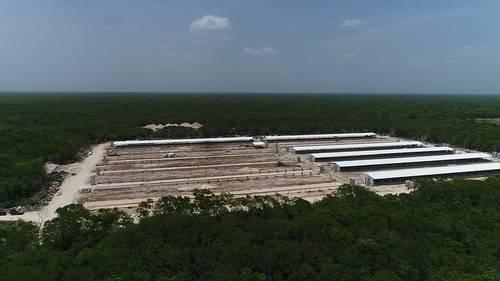 Granja Industrial de Cerdos