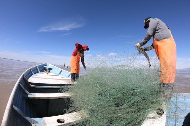 Pesca Curvina Golfo de Santa Clara