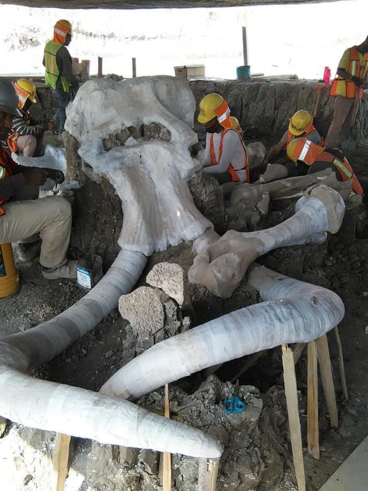 mamut Santa Lucía