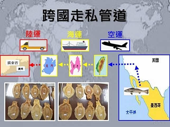 Totoaba Taiwán