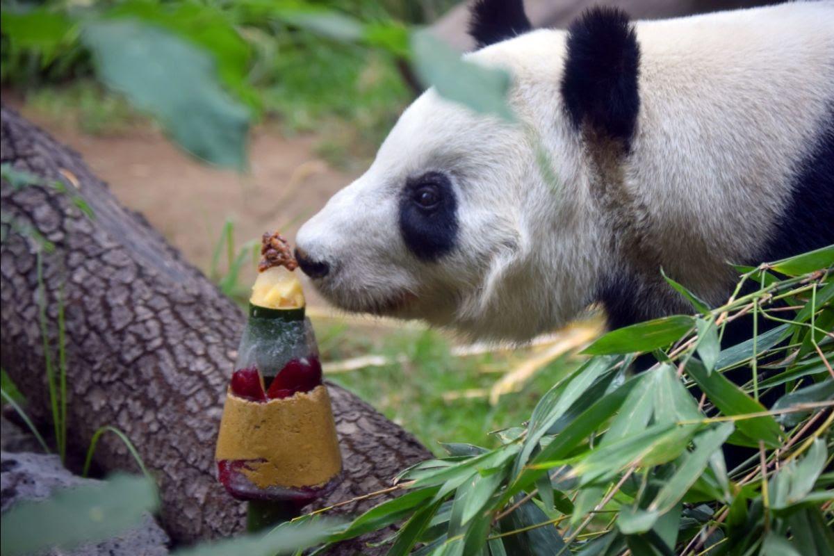 Panda cumpleaños