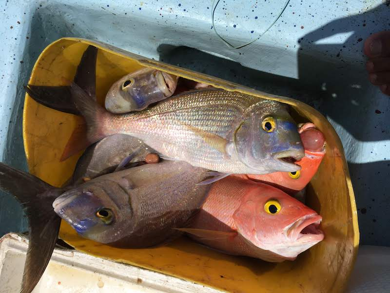 Pescados con plástico