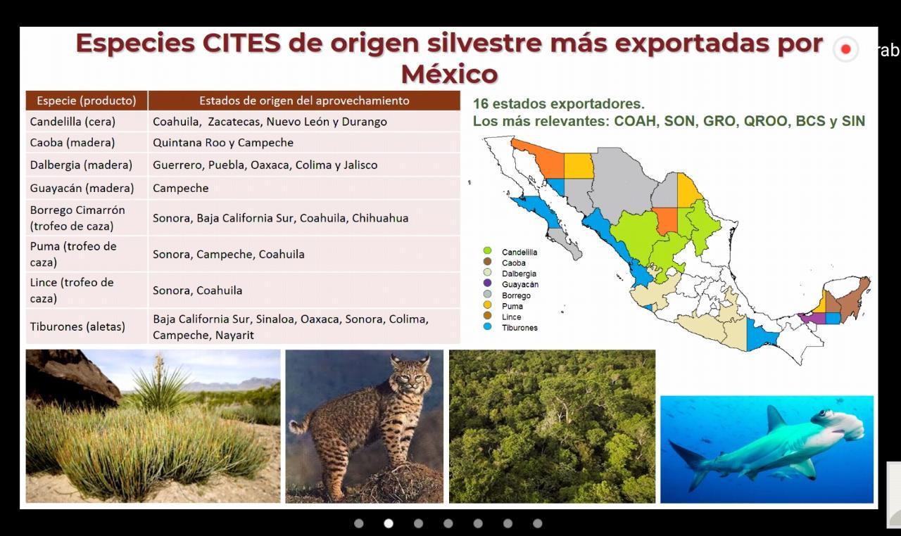 Cites México