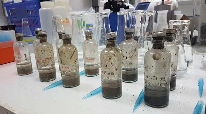 Bacterias petróleo