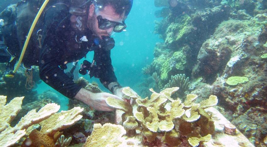 Reforestación corales