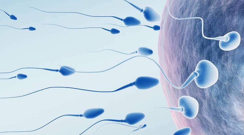 Ingesta Infertilidad