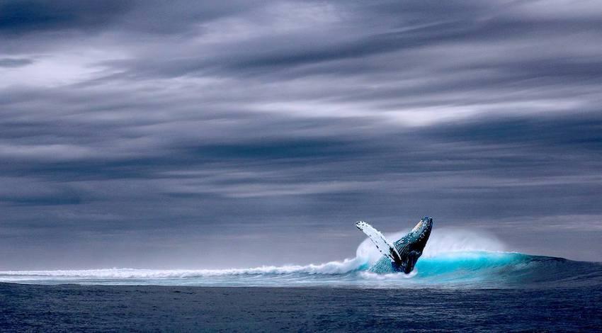 Día Mundial de los Océanos