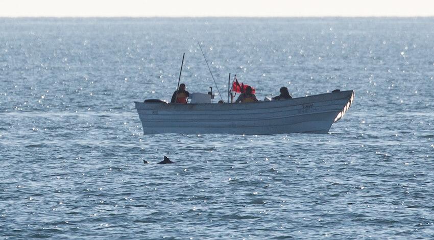 Imagen de Sea Shepherd, Museo de la Ballena, Conanp