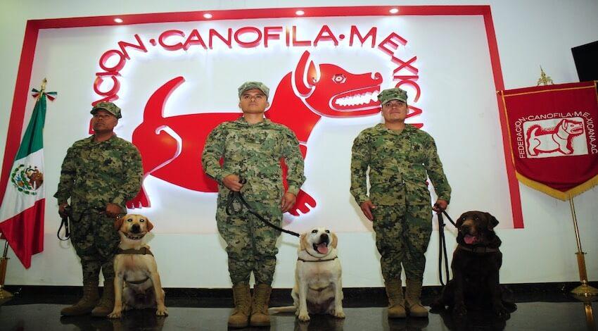 Semar Binomios Caninos