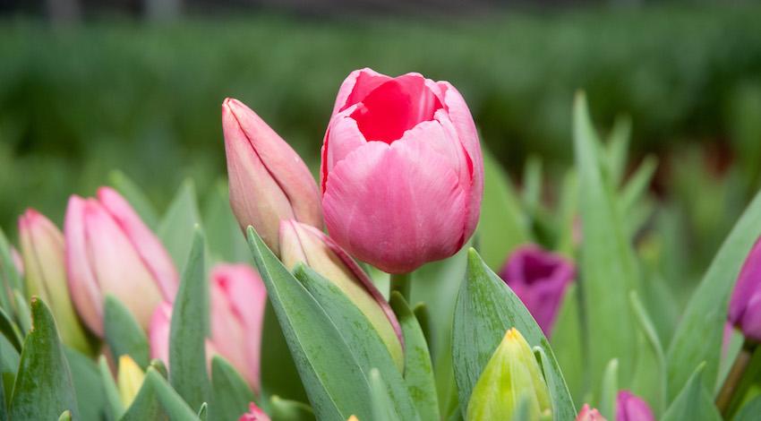 Flores 10 de Mayo