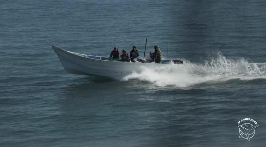 Ataque Sea Shepherd