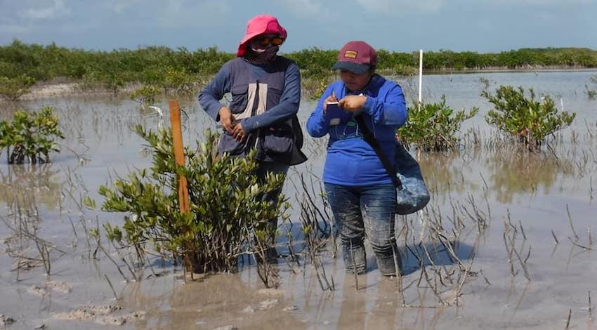 Manglar Fondo para el Cambio Climático