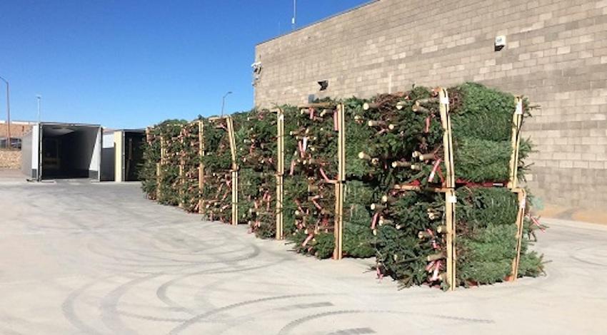 Árboles de Navidad con plaga de EUA