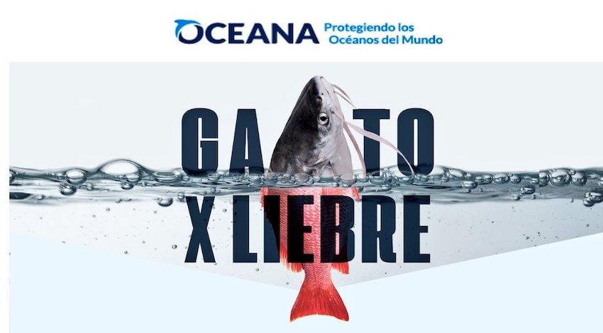 Oceana #GatoXLiebre