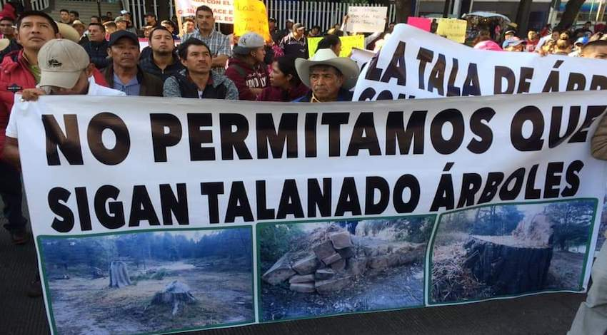 No a la tala en Ocuilán