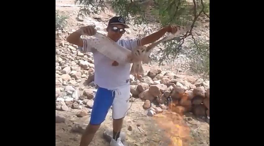 Lechuza quemada viva