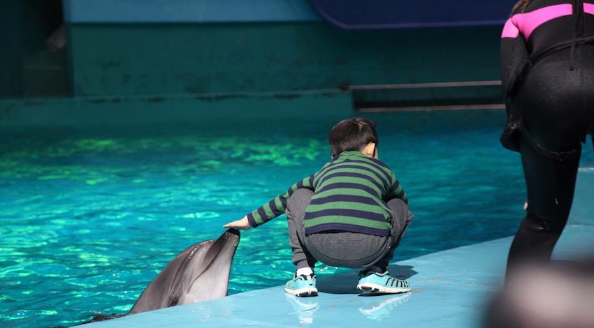 """Lanzan en México documental """"El secreto detrás de su sonrisa: La multimillonaria industria del entretenimiento con delfines"""""""