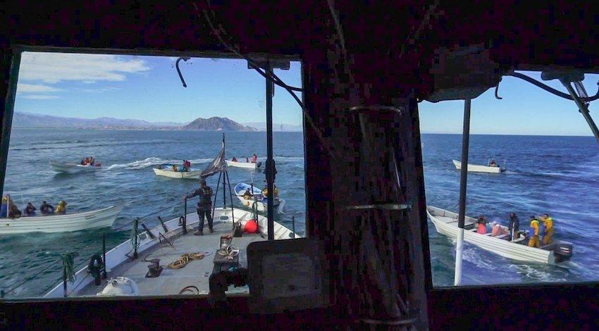 Ataque barco Sea Shepherd