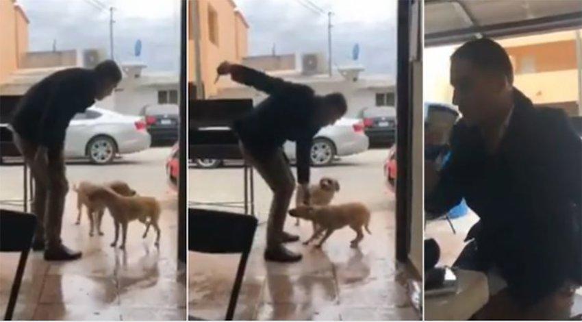 Sujeto apuñaló a perro