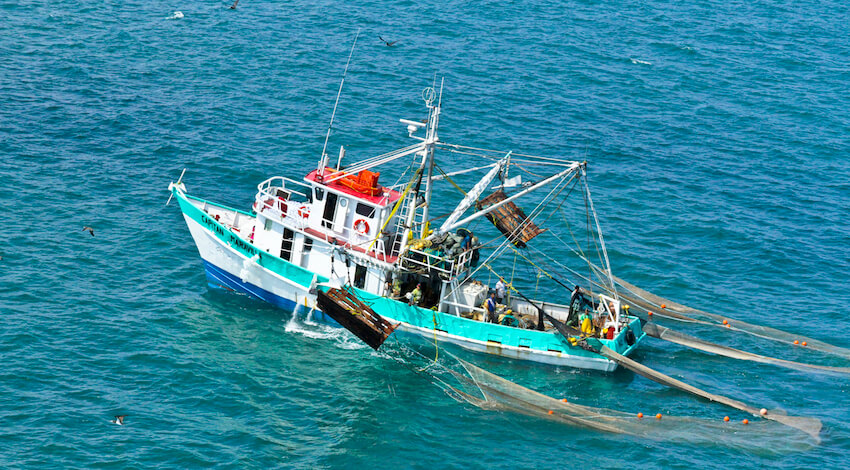 Flota Camaronera Mexicana