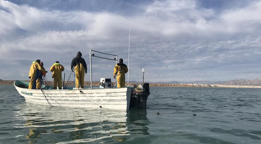 Pescadores ilegales Golfo de California