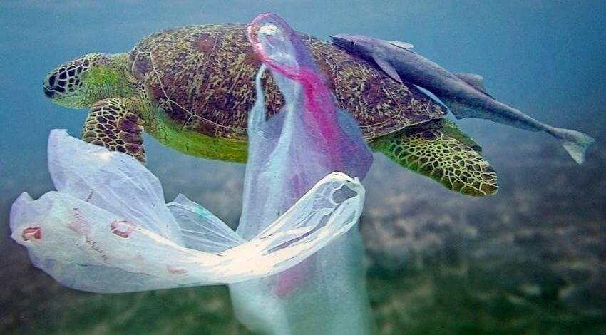 Industriales del plástico asumen compromisos con el medio ambiente