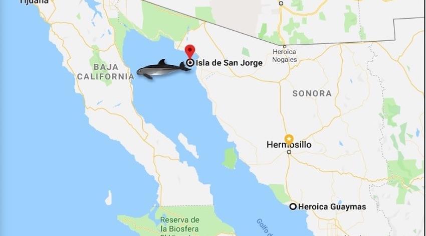 Mapa avistamiento vaquita marina