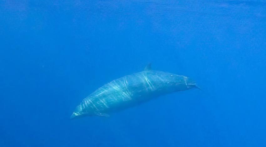 Nueva Ballena Foto: Sea Shepherd
