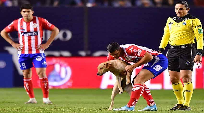 Perro San Luis