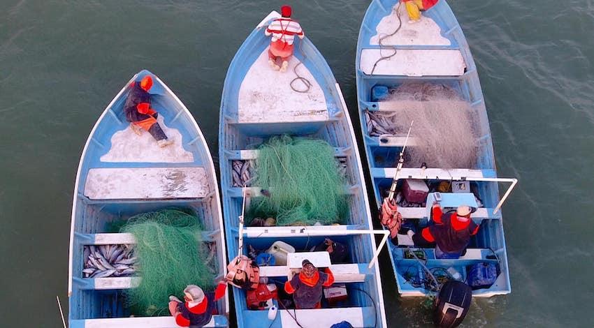 Pescadores hábitat vaquita marina