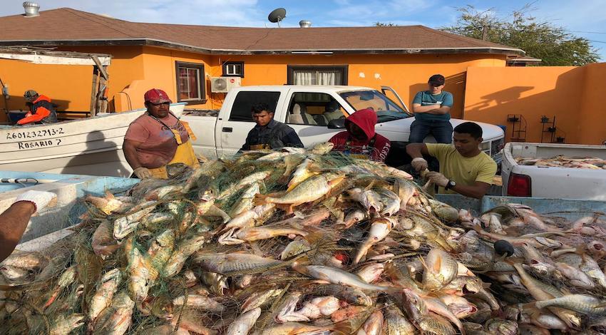 Pescadores Golfo de Santa Clara