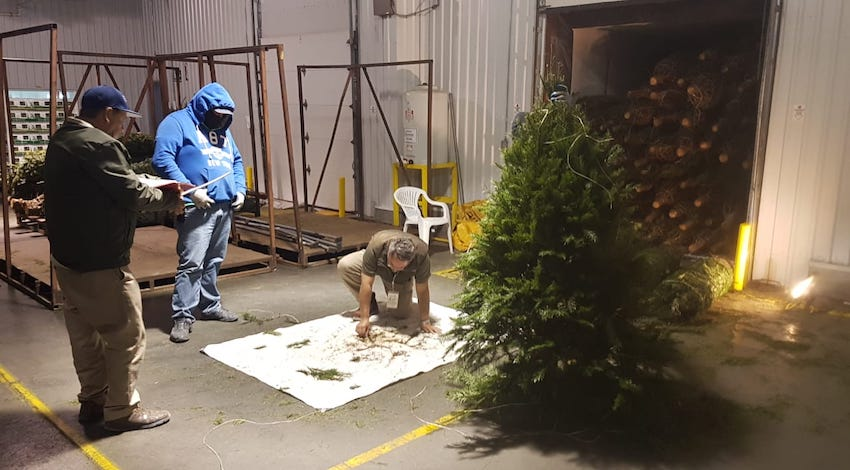 Verificación árboles de Navidad