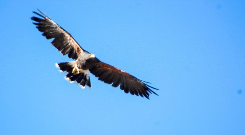 Águila Real Coahuila