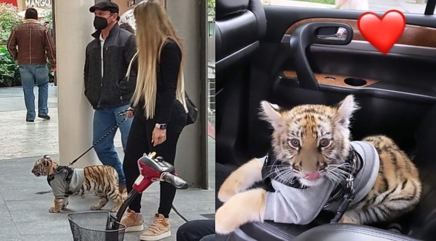 Tigre mascota