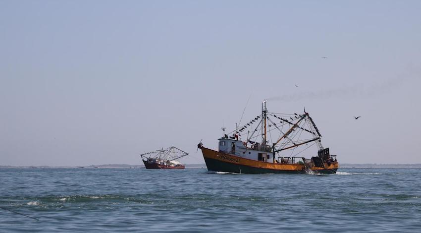 Pesca camarón Altamar