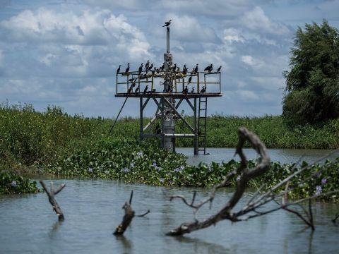 Crisis ambiental, social y de salud en Tabasco por la muerte masiva de manatíes que inició desde el 18 de mayo.