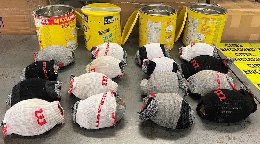 Tráfico Ilegal de tortugas de caja mexicanas en EU