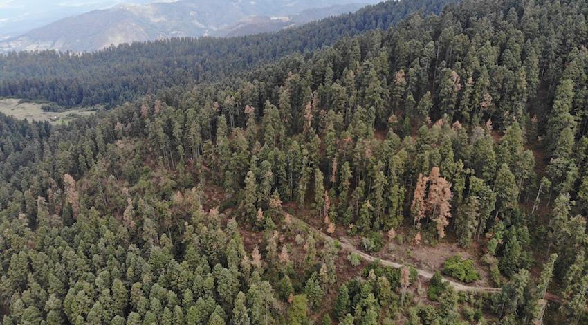 Plaga Reserva Mariposa Monarca