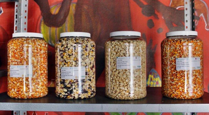 Banco comunitario de maíz